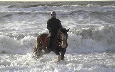 things to do in Cumbria: Cumbrian heavy horses