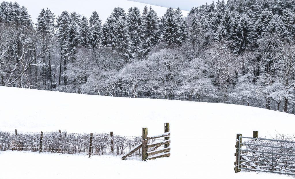 Christmas walk North Yorkshire Moors